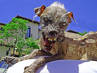 Ugly_dog2